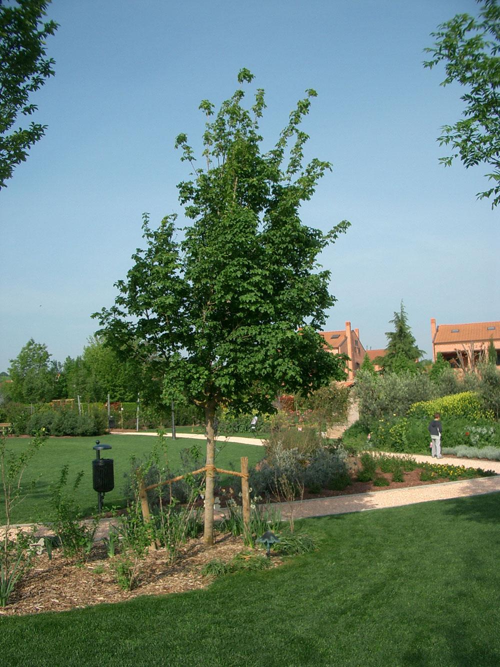 Alberi da giardino piccolo piante tropicali da giardino - Alberi giardino piccolo ...