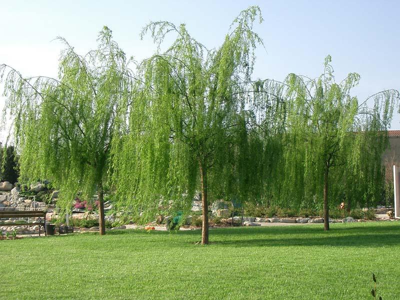 Il giardino il giardino degli angeli - Il giardino degli esperidi ...