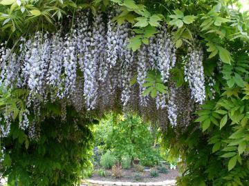 Il giardino segreto il giardino degli angeli - Ingresso giardino ...