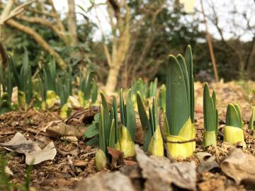 fioriture di febbraio