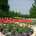 I Tulipani nel Giardino Segreto.jpg